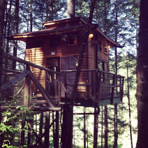Calypso tree house at Vertical Horions