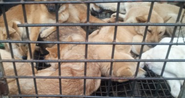 "Why we said ""no"" to trying dog meat in South Korea."
