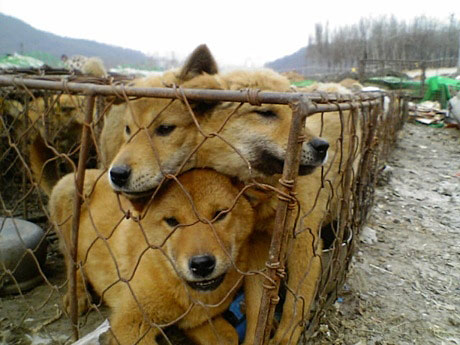 Nureongi dog meat