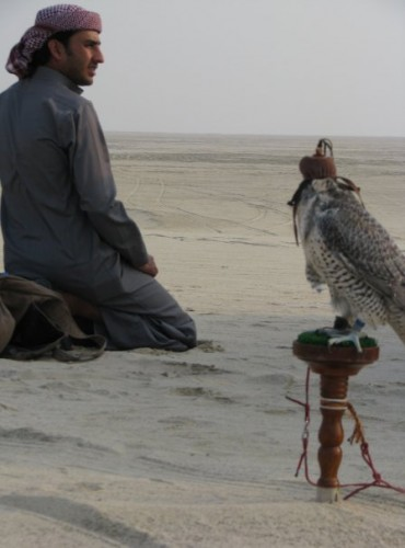 royal falcons in Bahrain