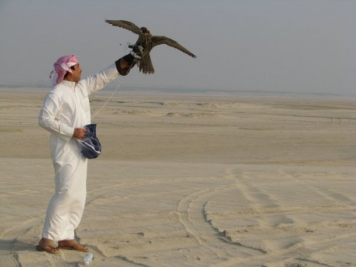 falcons in Bahrain