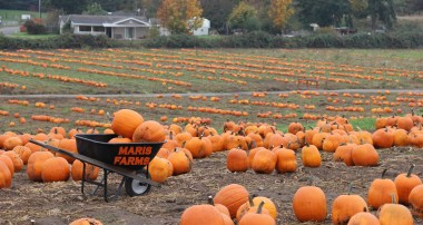 Maris Farms – Best Fall Activites