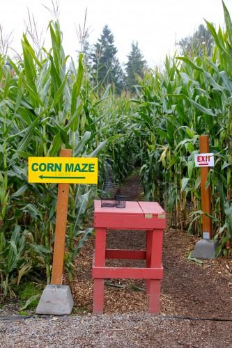 corn maze near Puyallup