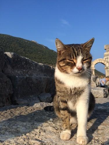 Cute kitties in Greece