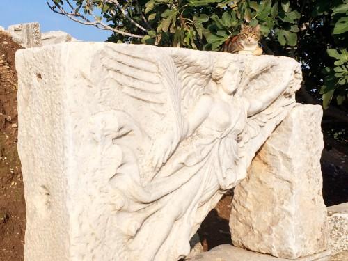 Cats all over Ephesus Turkey