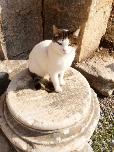 Cats all over Greece