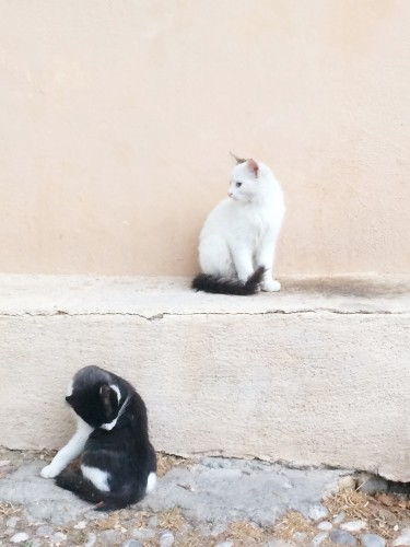 Cute cats of Greece
