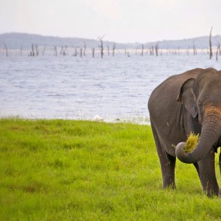 Our Sri Lanka elephant safari