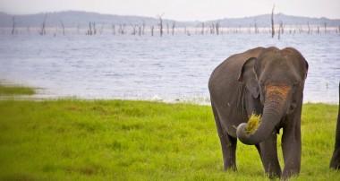 Our Sri Lanka elephant safari
