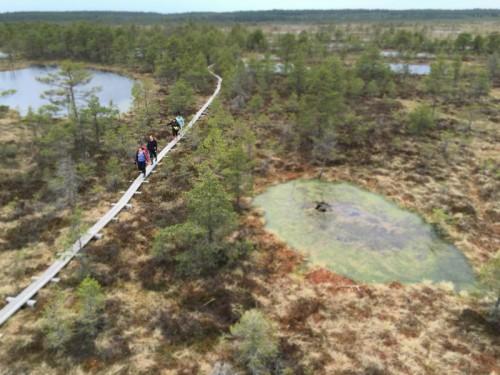Bog Walking Estonia