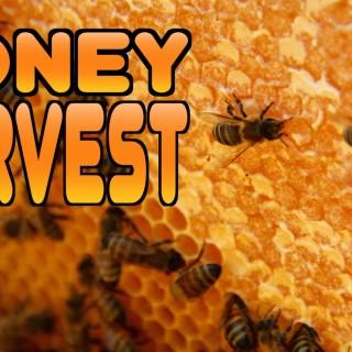 Honey Harvest at Castle Staudinger [VIDEO]