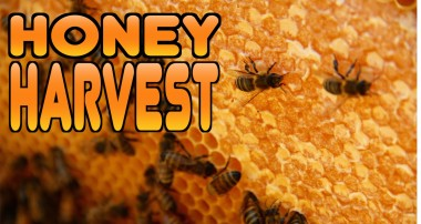 Honey Harvest at Castle Staudinger [VIDEO]