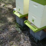 The new hives